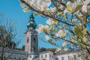 Außenansicht Stiftskirche St. Peter mit Blüten © Michael Rieß